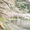湖畔の春 3