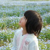 ネモフィラの咲く公園で 2