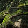 奈良公園の朝 〜太古の記憶〜