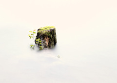 おんたけ王滝の自然湖に浮かぶ切り株