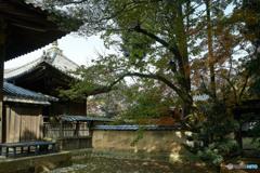 龍門寺裏庭