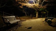 哀愁の公園ベンチ