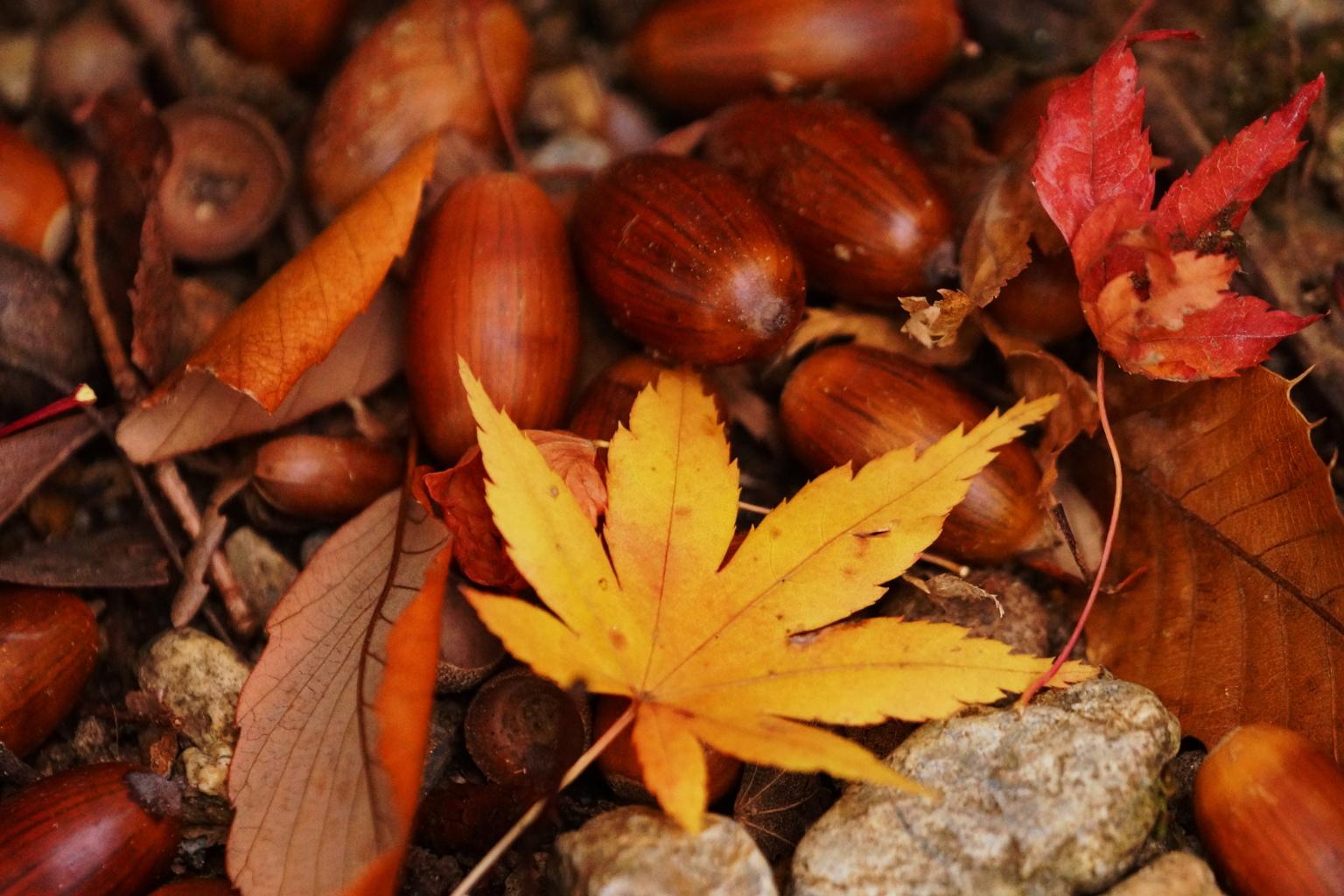 トトロの秋みつけた