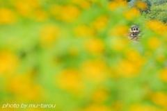幸福の黄色いお花
