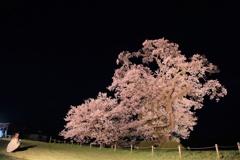 塩崎の大桜
