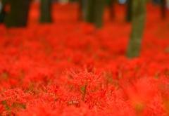 赤の中の「赤」