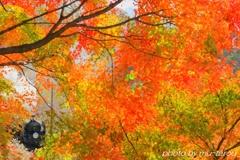 秋色かくれんぼ