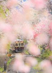 神戸、輝く季節