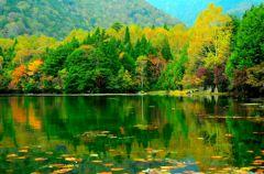 湯の湖、緑の紅葉。