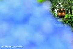紫陽花の驛
