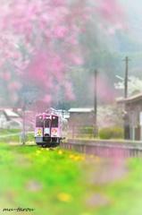 春、旅、会津 !
