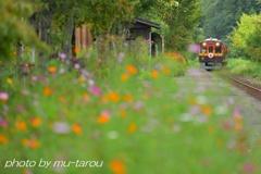 Kamikanbai autumn color