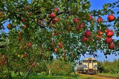 りんごの詩