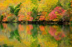 湯ノ湖、黄葉。