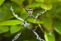 蜘蛛・××