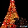 ケープコッドのクリスマスツリー
