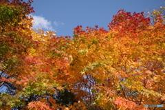 支笏湖の秋