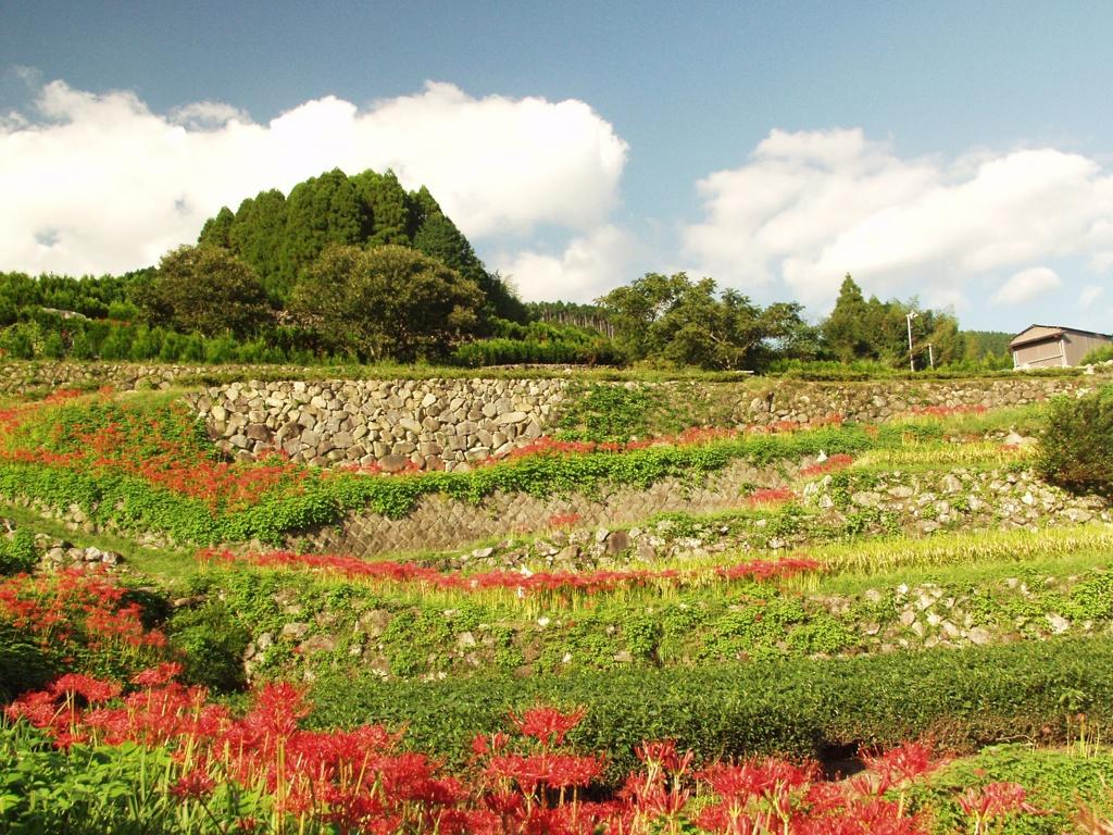 星野村秋の風景