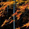 延算寺、晩秋の竹林