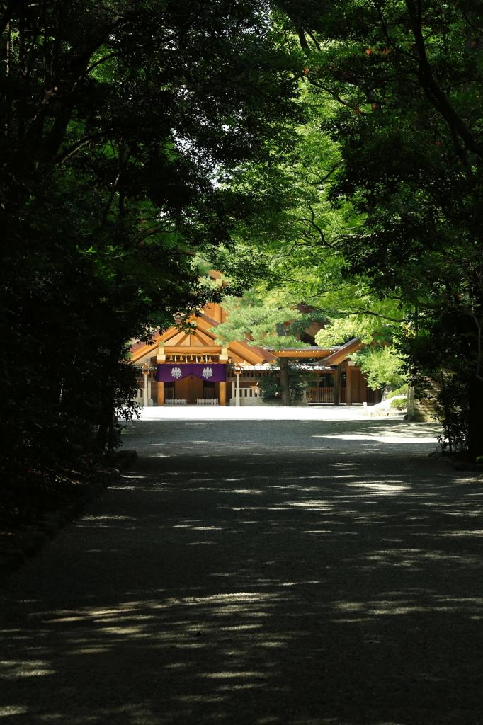 優しい森、神話の森』のタイトルの写真