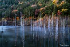 立ち枯れ木と秋の色彩