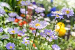 お花が いっぱい‥初夏景色
