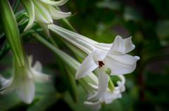 この花は、秋を呼ぶ・・(^^;