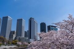 平成最後の春爛漫‥大阪ビジネスパーク