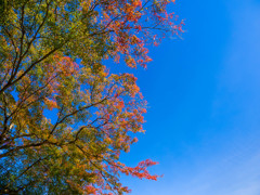 青空に色づき始めた秋模様・・