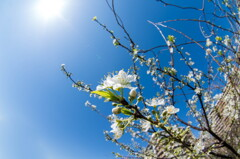 """街は既に""""春""""真っ盛り"""