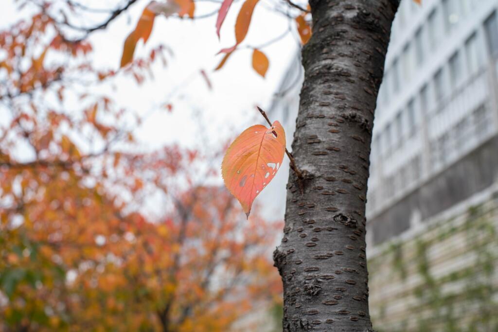 晩秋、焦がれて冬を待つ‥