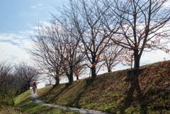 冬ざれて‥堤の桜