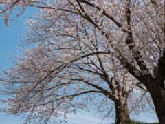爽やかに‥春