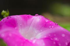 今日の雨は秋雨前線・・だそうです(^^;