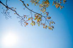 これぞ秋晴れ・・日本晴れっ