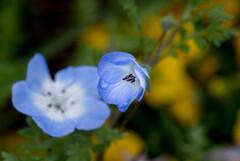 雨上がり‥旬の青