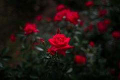 秋の紅赤‥