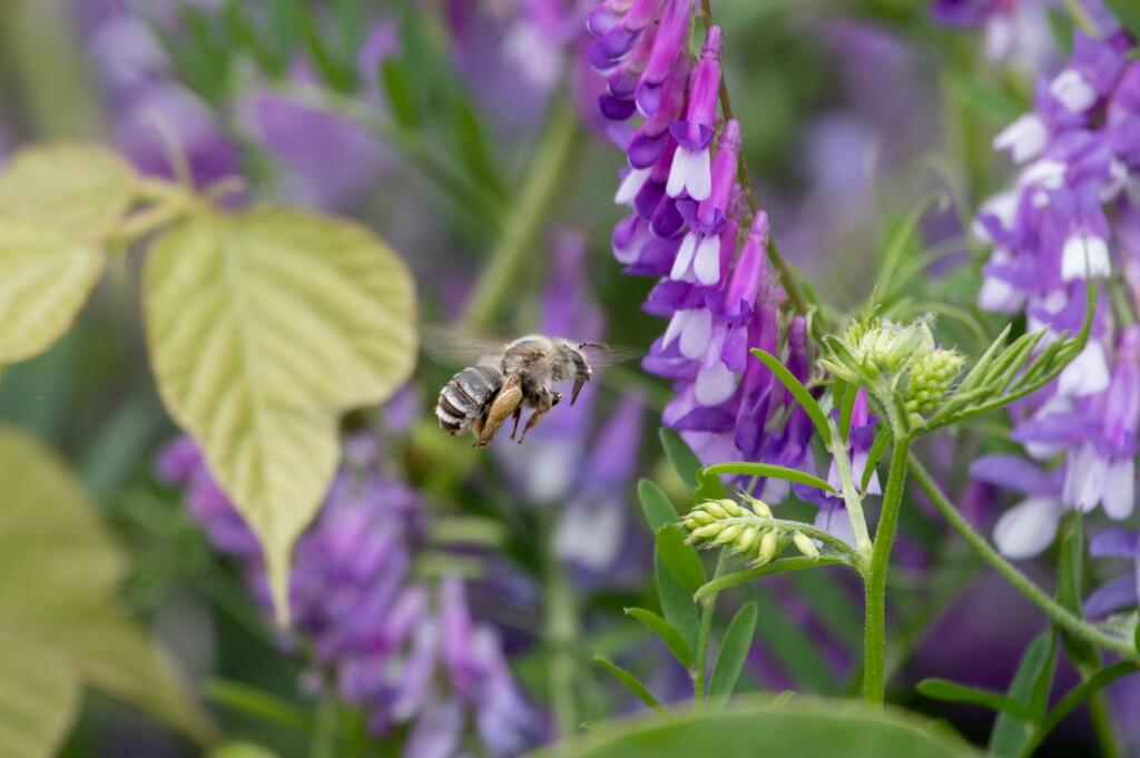 いつものお買い物‥ミツバチ