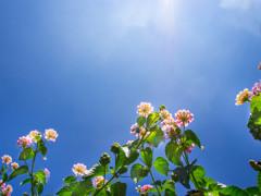 この青空が暑かった(;^_^A