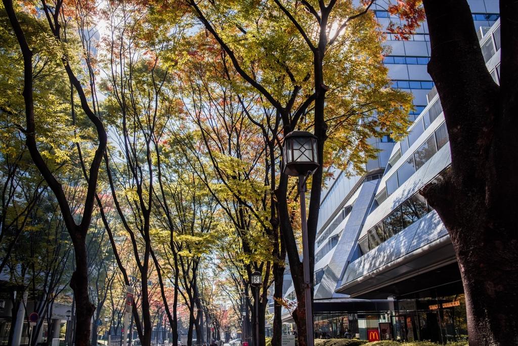 秋色、オフィス街