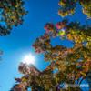 秋晴れに、紅葉はじめ・・