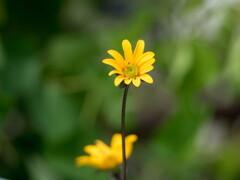 今日も雨‥止み間のお花