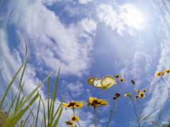 梅雨の晴れ間に蝶は飛ぶっ