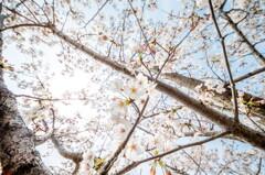 陽射しと花と‥降り注ぐ春。