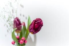 花瓶の春‥チューリップ