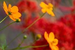 秋色‥って、燃える色