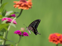 花と蝶(⌒▽⌒)b