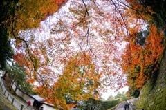 晩秋か初冬か、はたまた冬か‥