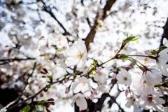 寒が緩んで「春」戻る‥