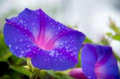 神無月初日は、無情の雨・・